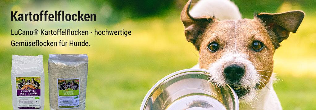 Hund mit Futternapf im Mund
