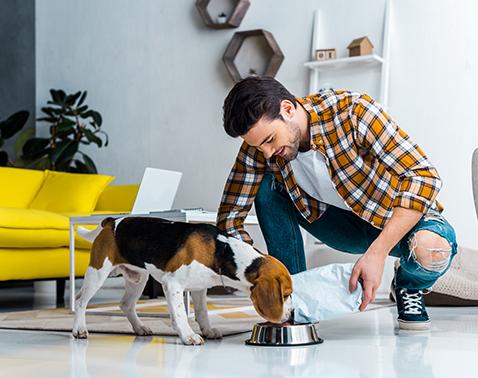 Mann füttert einen Hund